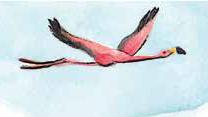 Piirroskuva lentävästä flamingosta
