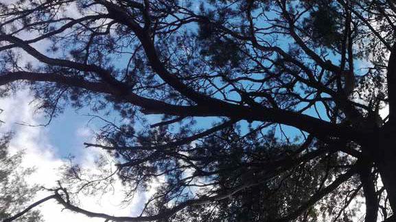 Puun latva taivasta vasten.