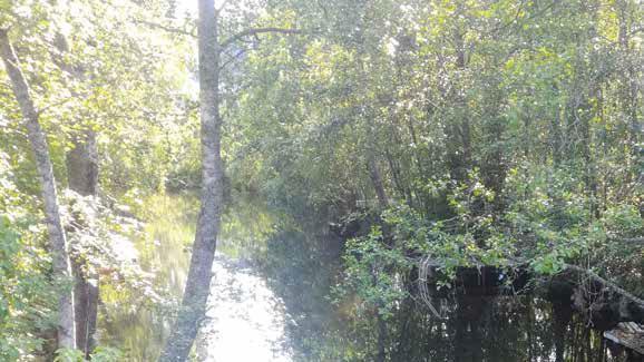 Joki ja vehreä metsä sen rannoilla.